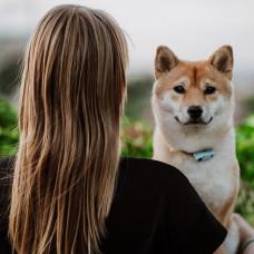充電版Dog 簡約藍(9*8*3公分)