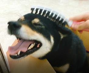 為什麼你該幫家裡的貓狗梳毛?——為毛孩梳