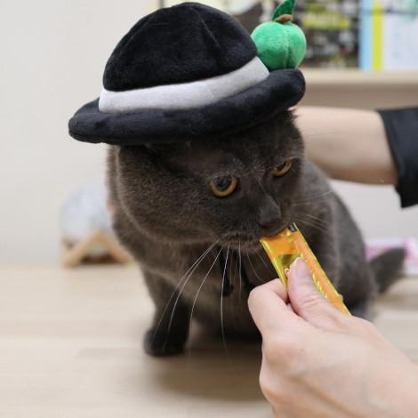 名畫寵物帽 戴帽子的男人帽(頭圍31公分),CSS_新品,bd_新品_20210915