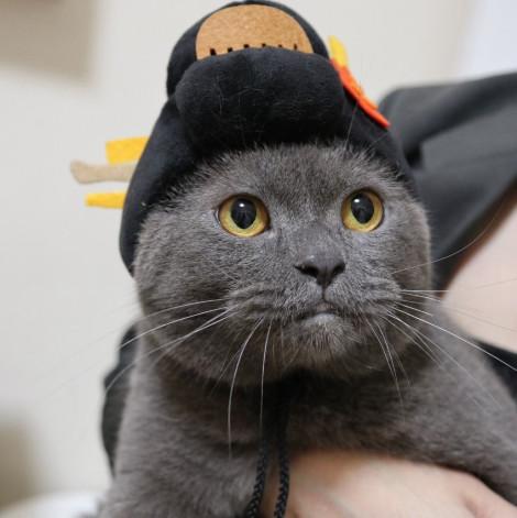 名畫寵物帽 納涼美人子日式頭(頭圍31公分),CSS_新品,bd_新品_20210915