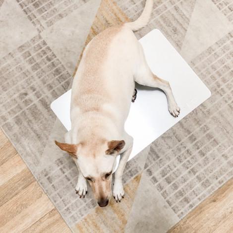 Marukan涼感高純度鋁製涼墊 (2XL) 夏天貓狗寵物降溫涼感涼墊睡墊鋁墊寵物用品推薦,bd_涼夏精選,CSS_涼墊1件69折,PD_涼墊1件69折,bd_床窩_15kg以上
